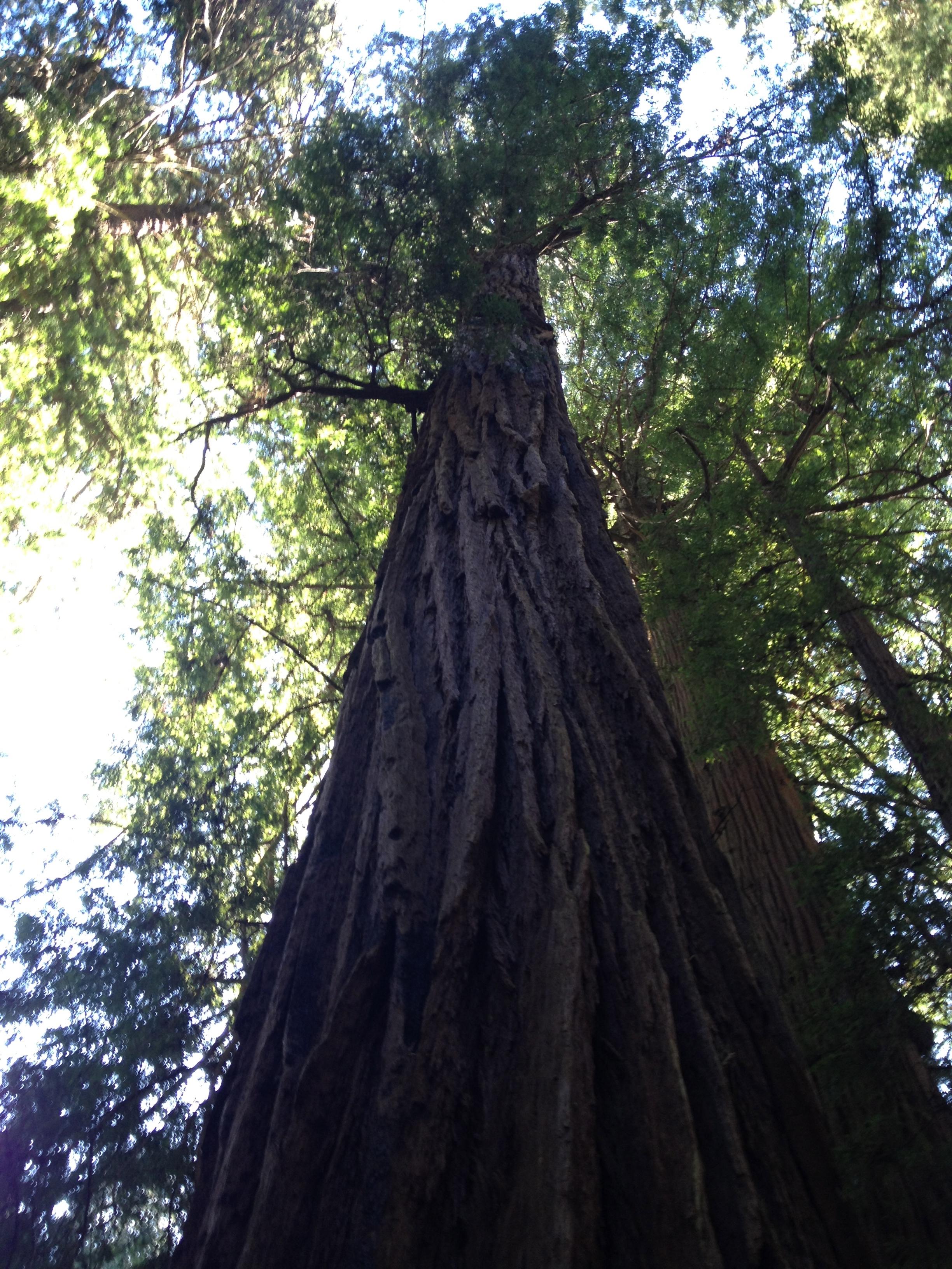 Muir Woods - California, USA