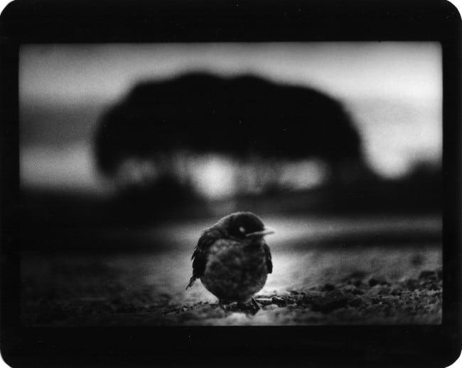 Giacomo Brunelli Bird