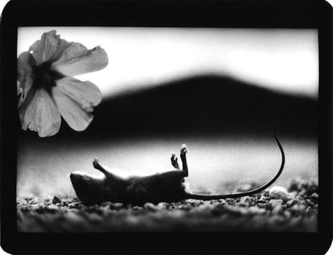 Brunelli_Giacomo_mouse