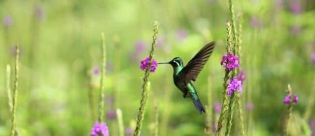 El Silencio Lodge & Spa - Poas Volcano National Park, Costa Rica - hummingbird