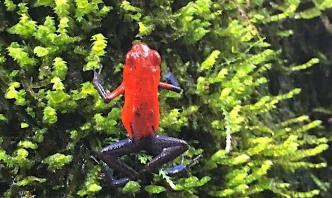 el-silencio-lodge-spa-poas-costa-rica frog