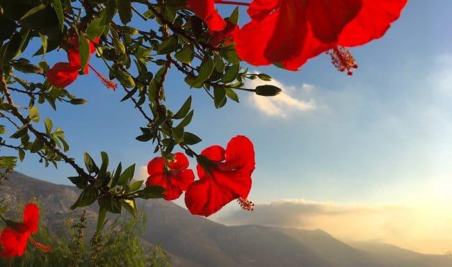 aegialis-hotel-and-spa-aegean-greece Amorgos