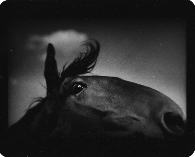Giacomo Brunelli Untitled_Horse Cloud
