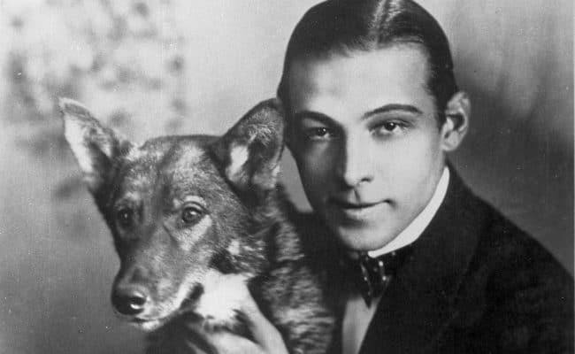 Rudolph Valentino Pet Dog